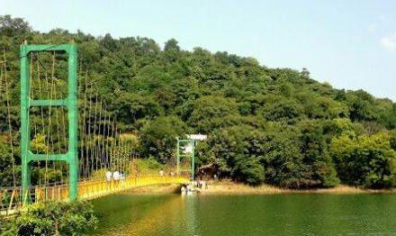 Image result for gottam gutta forest